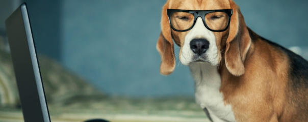 Image-of-dog-in-glasses-by-a-laptop