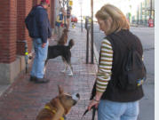 image-of-dog-training-session-with-dog-owners