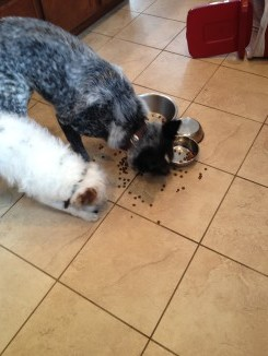 image of aggressive dog behavior at mealtime