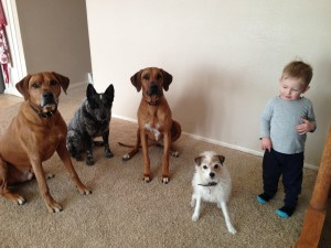 Image of the results for adopting a puppy is a big happy family!